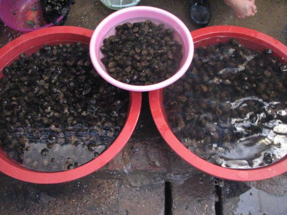 caracoles mercado yangshuo