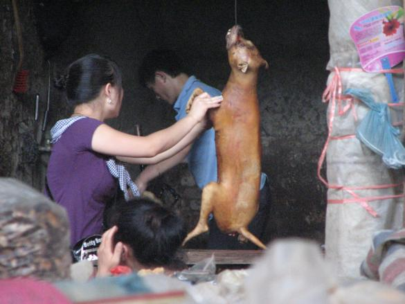 comer perro mercado yangshuo