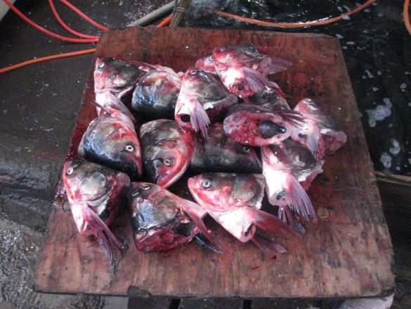 mercado yangshuo pescado