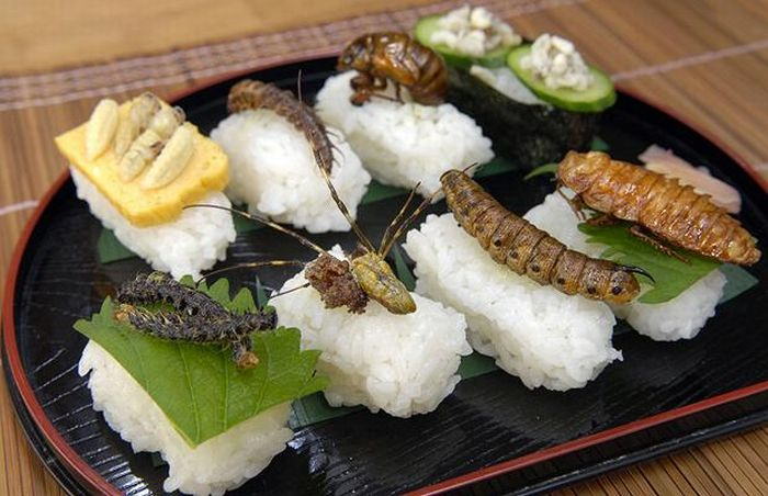 sushi insectos 1