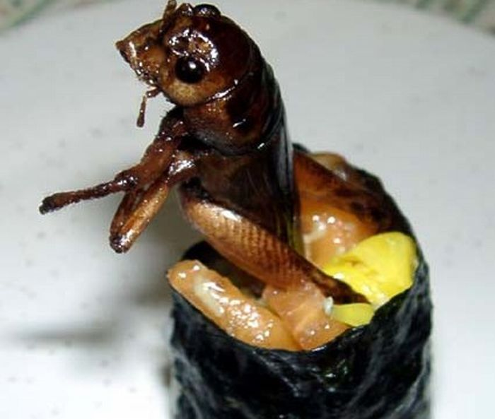 sushi insectos 2