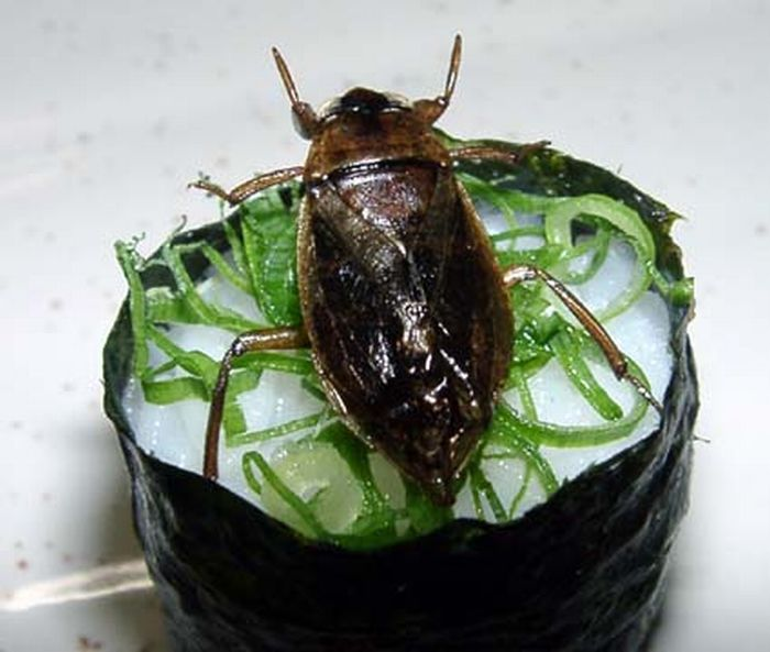sushi insectos 5