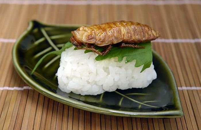 sushi insectos 7